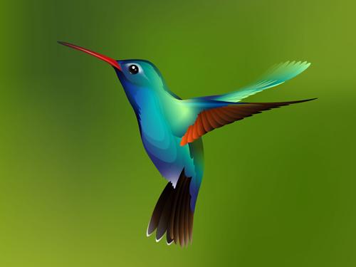 Free colorful hummingbird vector | hummingbird drawing.
