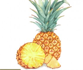 Watercolor pineapple drawn vector