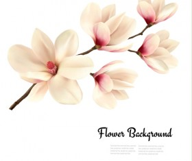 White magnolia with flower background vector 01