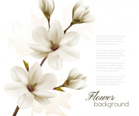 White magnolia with flower background vector 02