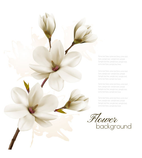 White magnolia with flower background vector 02 free download white magnolia with flower background vector 02 mightylinksfo