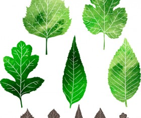 Black leaves and green leaves vector