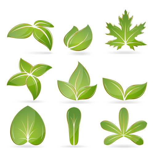 Different green leaves vector set 02