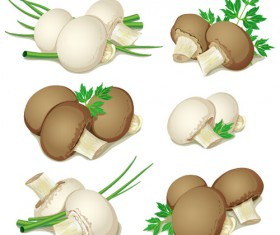Mushrooms and vegetables leaves vector