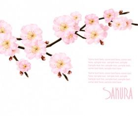Sakura branch with spring background vector