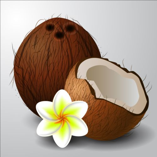 coconut with white flower vector vector flower free download