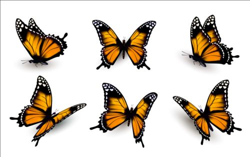 Colorful butterflies illustration vector collection 14