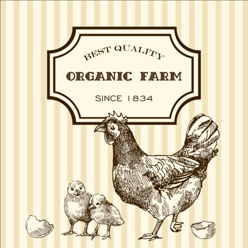 Hand drawn chicken eggs poster vector 02