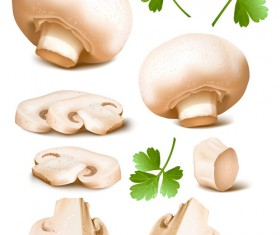 Mushrooms with coriander leaves vector