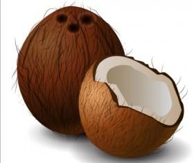 Realistic coconut illustration vector