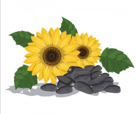 Sunflower seed vector