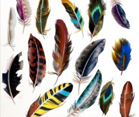 Various dird feathers set vector 01