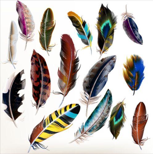 Various dird feathers set vector 01