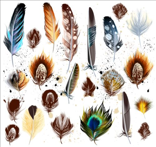 Various dird feathers set vector 02