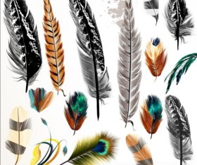 Various dird feathers set vector 04