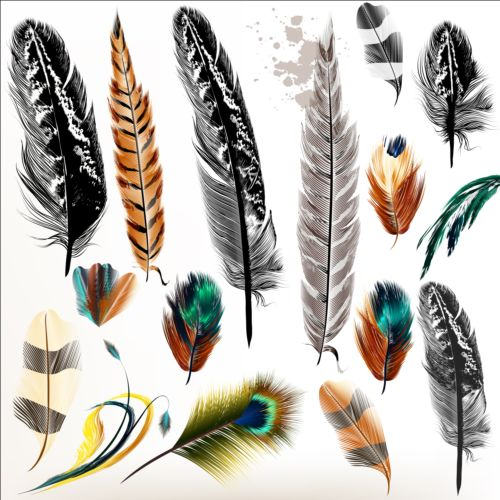 Various dird feathers set vector 04