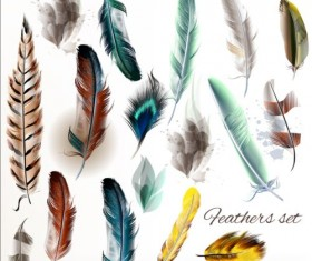 Various dird feathers set vector 05