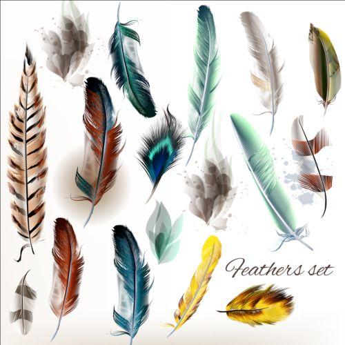 Various dird feathers set vector 05