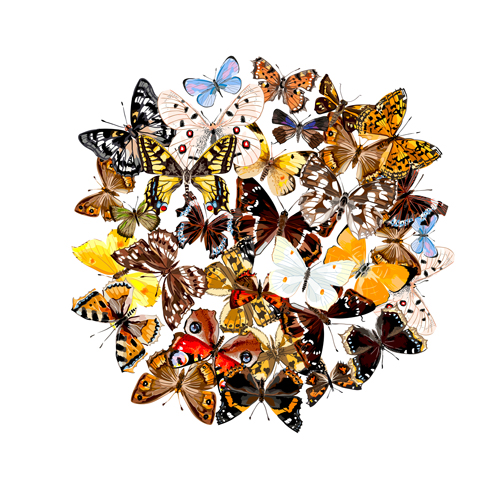 Vintage butterflies art background vector 04