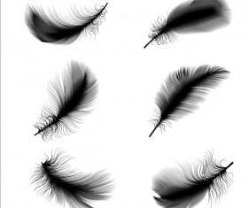 Black feathers illustration vector set 01