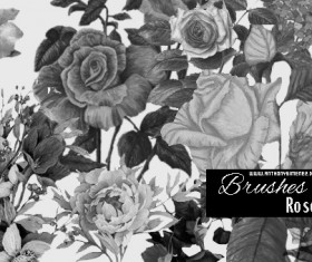 Brushes Roses vintage styles