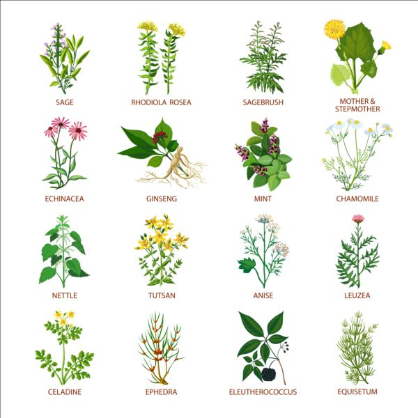 Different Plants Vector Illustration Set Free Download