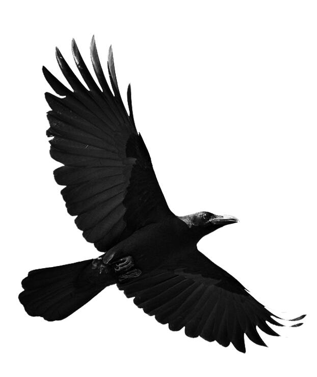 Flying eagle photoshop brushes photoshop brushes free download flying eagle photoshop brushes altavistaventures Images