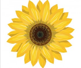 Simlpe sunflower vector