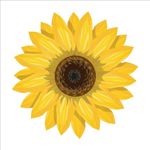 Simlpe sunflower vector - Vector Flower free download