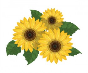 Sunflower with green leaves vector