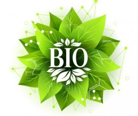 Bio label badge with green leaves vector 06