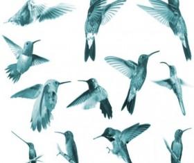 Jewelled Wings Photoshop Brushes