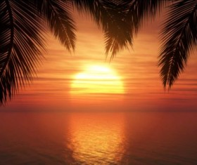 Palm trees with sunset summer background 02