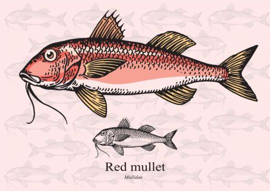 Red mullet fish vector vector animal free download for Red mullet fish