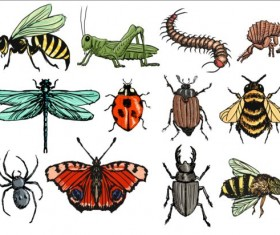 Vector Insects huge collection 03