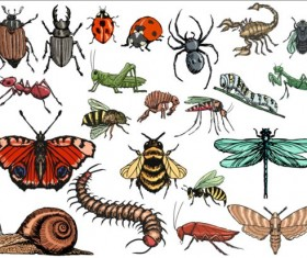Vector Insects huge collection 04