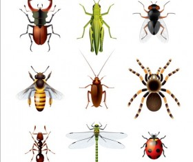 Vector Insects huge collection 05