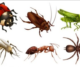 Vector Insects huge collection 06
