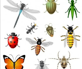 Vector Insects huge collection 07