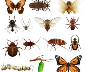 Vector Insects huge collection 08