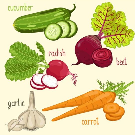 Vegetables with name design vector 01 - Vector Food free download