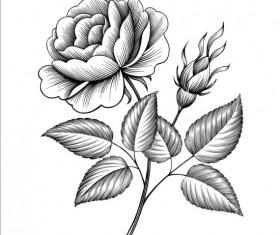Vintage rose engraving template vector