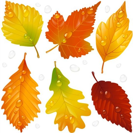 Autumn Leaves With Water Drop Vector Vector Plant Free