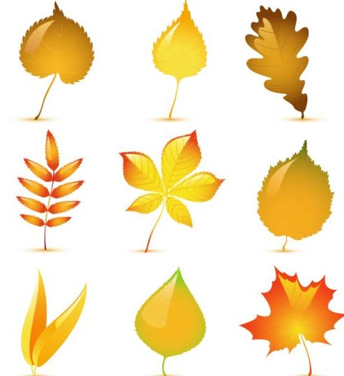 Beautiful autumn leaves vector set - Vector Plant free download: freedesignfile.com/248233-beautiful-autumn-leaves-vector-set