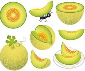 Cantaloupe melon digital clipart vector