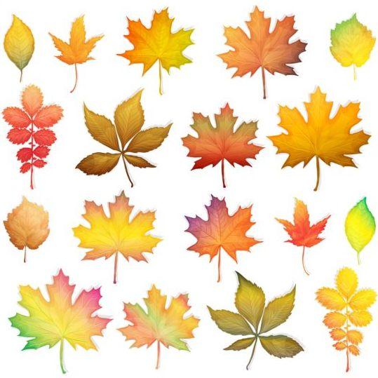 Colorful autumn leaves vectors 01