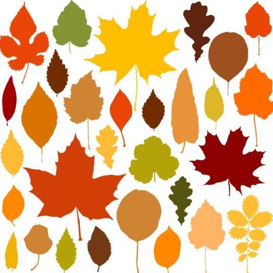 Colorful autumn leaves vectors 02