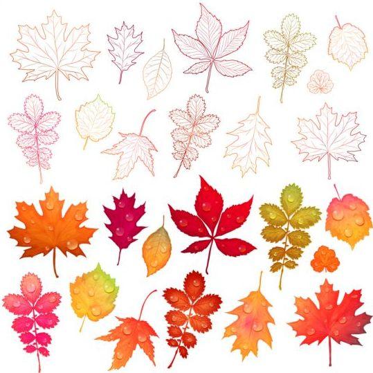 Colorful autumn leaves vectors 03