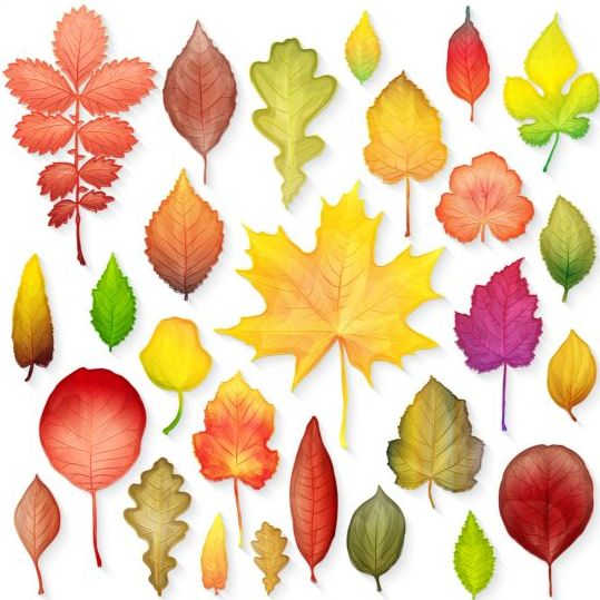Colorful autumn leaves vectors 05