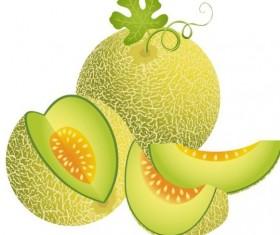 Juicy cantaloupe melon vector